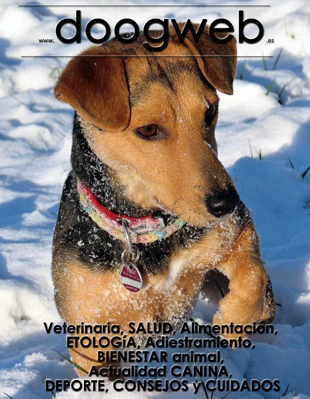 Revista gratis de perros de Doogweb, noviembre 2018.