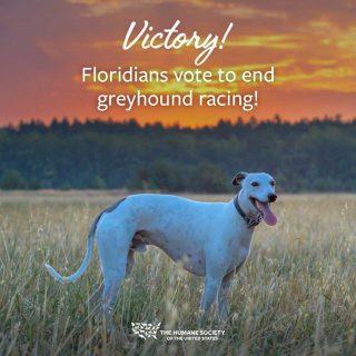 Florida aprueba la Enmienda 13 para poner fin a las carreras de galgos.