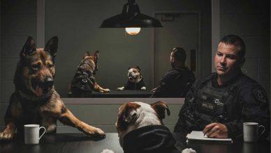 La unidad canina de la policía de Vancouver ha sacado un calendario 2019 con sus compañeros caninos.