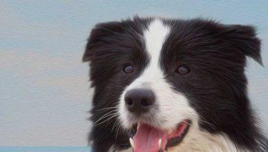 El fin de semana del 24 y 25 de Noviembre de 2018, se celebrará en Málaga, España, la Exposición Internacional Canina CAC - CACIB Mediterranean Winner.