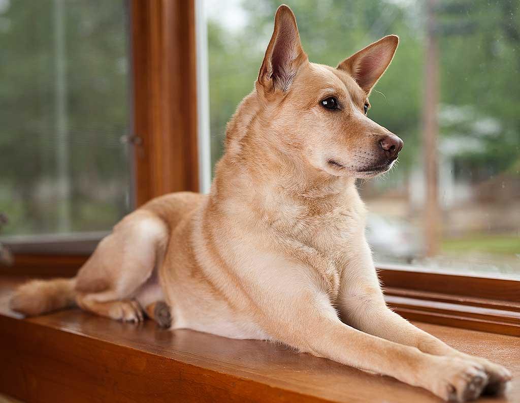 Metacognición en perros: ¿Saben los perros cuando están equivocados?