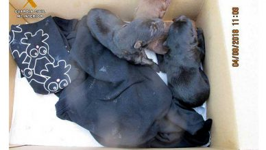 El SEPRONA de la Guardia Civil investiga a dos personas por un presunto delito de maltrato animal Uno de los investigados introdujo cuatro cachorros de perro en el interior de un saco y los cubrió de piedras, depositándolos en un camino del término municipal de Malanquilla.