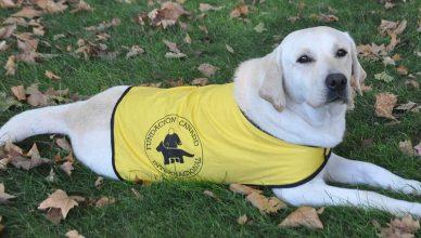 Fundación Canadd Internacional preparará un Perro de Asistencia para Enfermedad de Alzheimer.