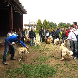 Regálate un Curso avanzado de educación canina.
