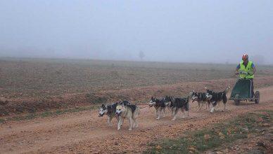 Arranca la XXVII Travesía con Perros de Tiro en el Moncayo.