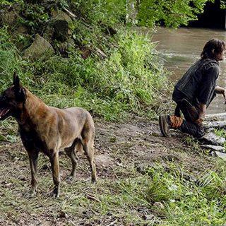 El perro de The Walking Dead está en peligro (en la ficción claro)