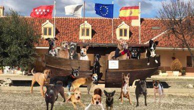 El acuerdo entre la Fundación el Arca de Noé – FAN- y Gloria Pets es una muestra más del compromiso y preocupación de la compañía navarra por la causa animal