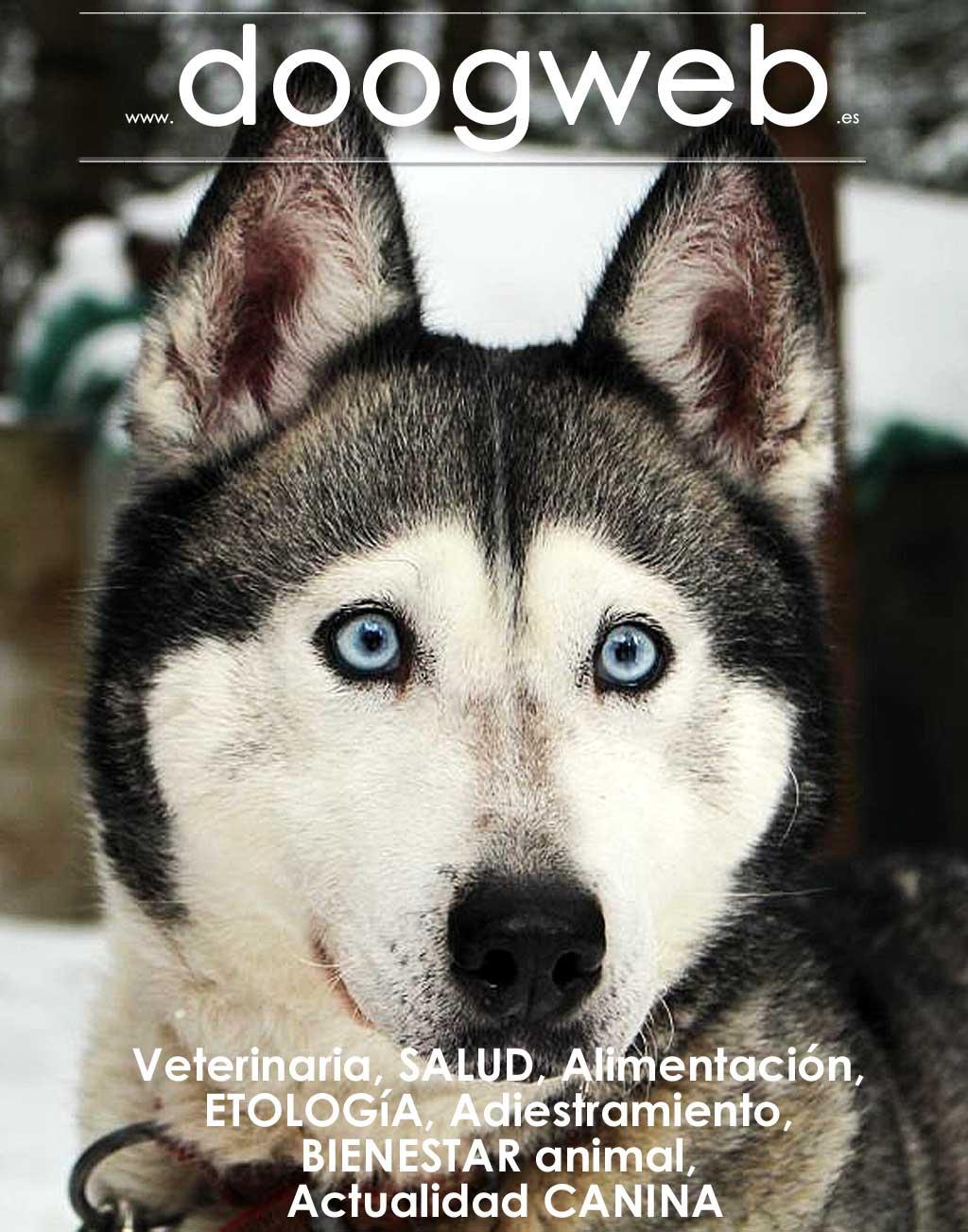 Revista gratis de perros de Doogweb 765.