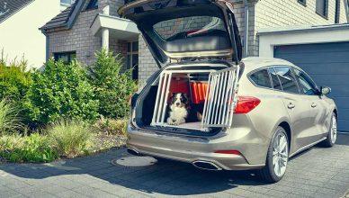 1 de cada 3 conductores con perros no viaja con su perro de forma segura.