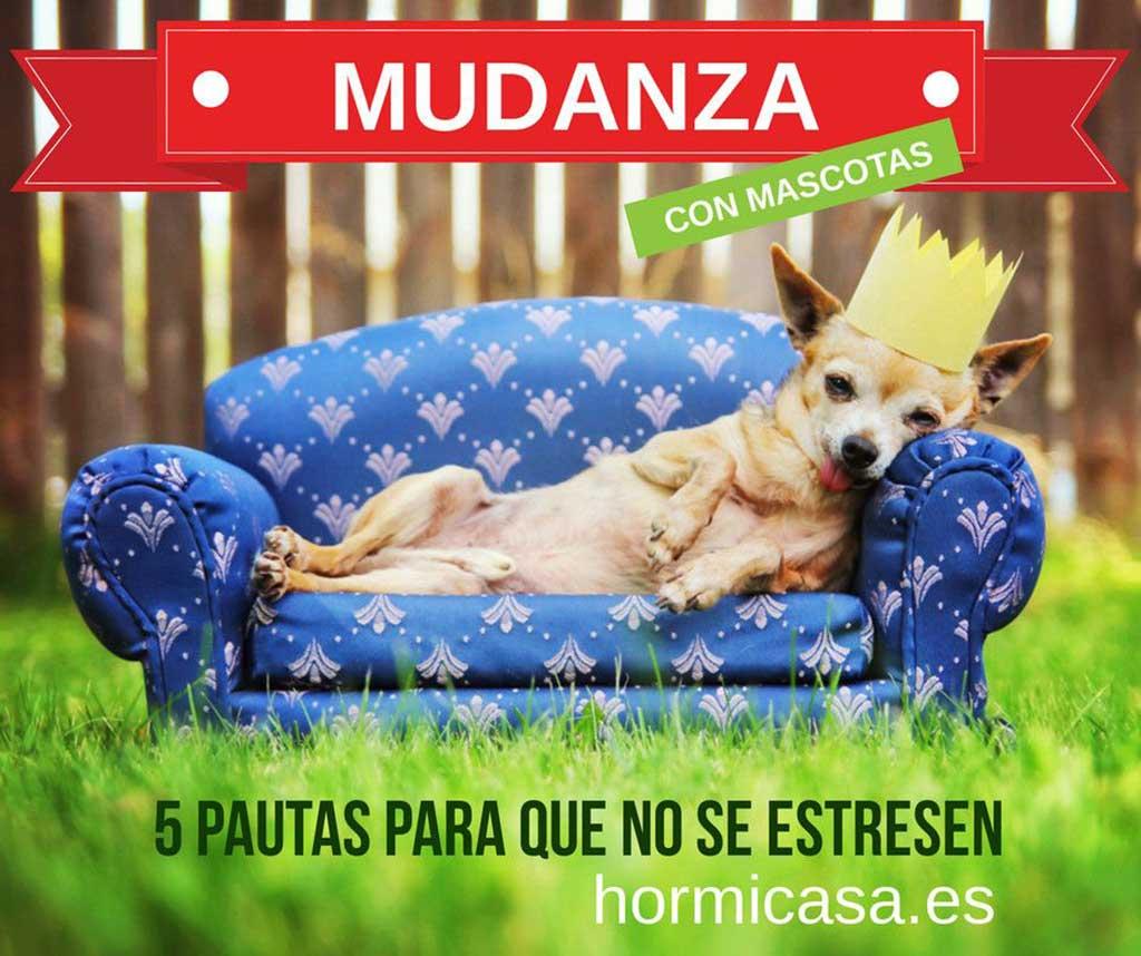 5 pautas para mitigar el estrés de los perros durante las mudanzas.