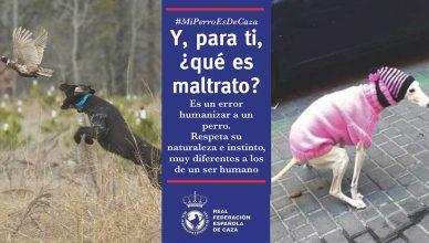RFEC denuncia la humanización de los perros.