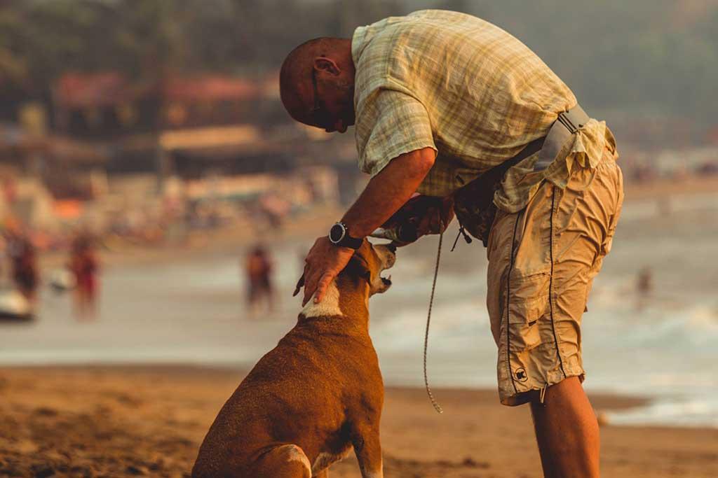 ¿Los perros huelen el miedo? Transmisión de emociones del humano al perro.