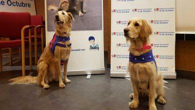 El 12 de Octubre muestra los beneficios de la terapia con perros en pacientes alcohólicos.