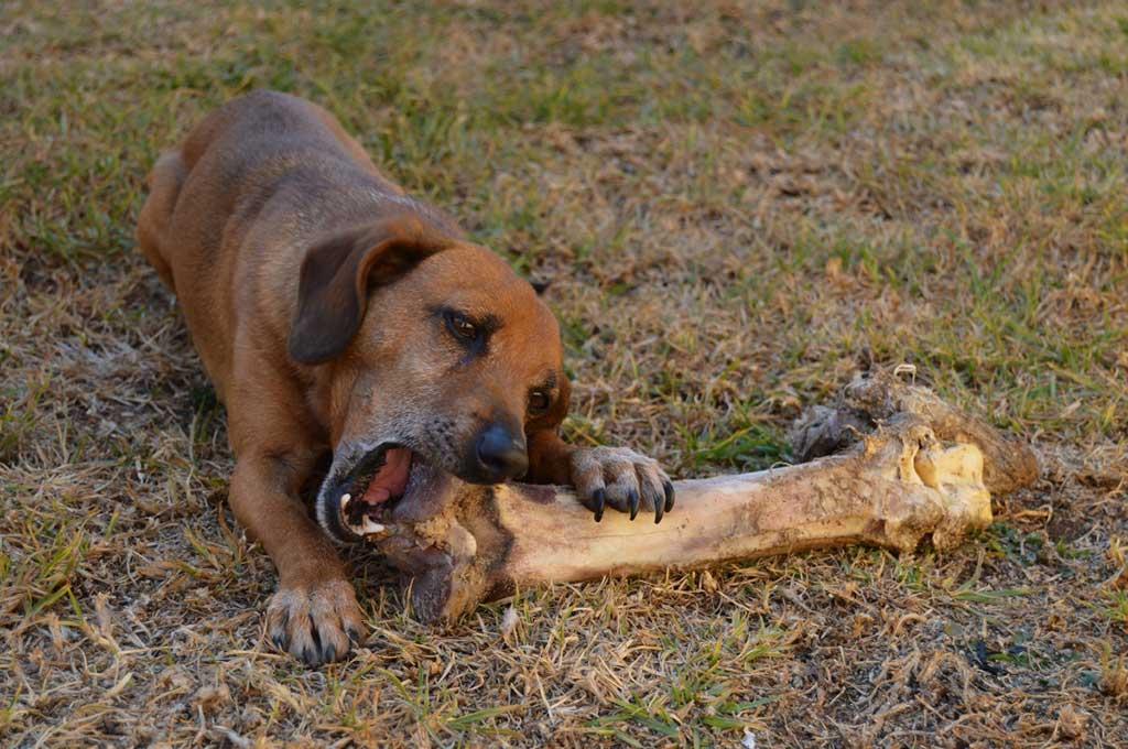 Dietas a base de vegetales (veganas) para mascotas: una encuesta sobre las actitudes y prácticas de alimentación de los dueños de perros y gatos.