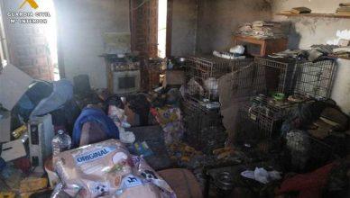 Criadero ilegal de perros en El Burgo de Ebro .