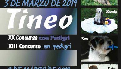 XXV Feria del Perro y concursos caninos en Tineo.