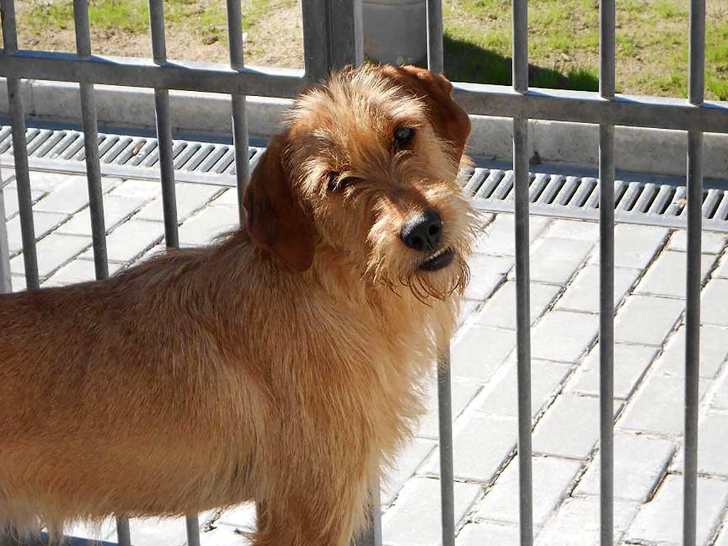 Foro Municipal de Protección y Bienestar de los Animales en Madrid