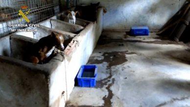 SEPRONA de la Guardia Civil detiene o investiga a 600 personas maltrato animal en 2018.