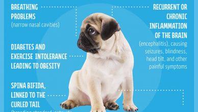 PETA ataca ahora a las exposiciones caninas y a los perros de raza.