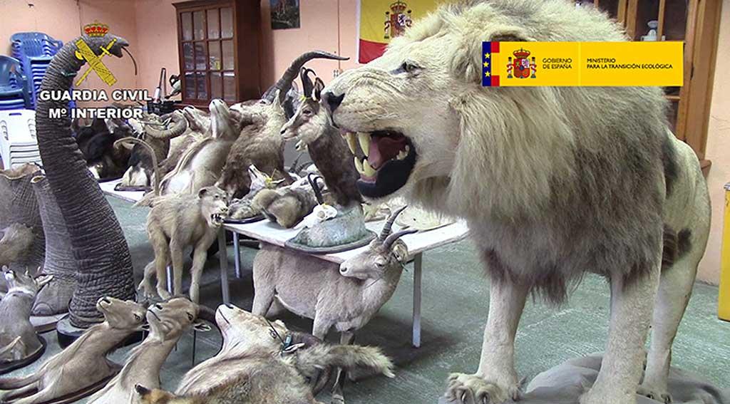 """Operación """"Taxideralia"""", Lucha contra el Tráfico de Especies Silvestres"""