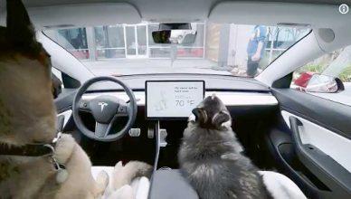 """Tesla incorporará un """"modo perro"""" a sus coches."""