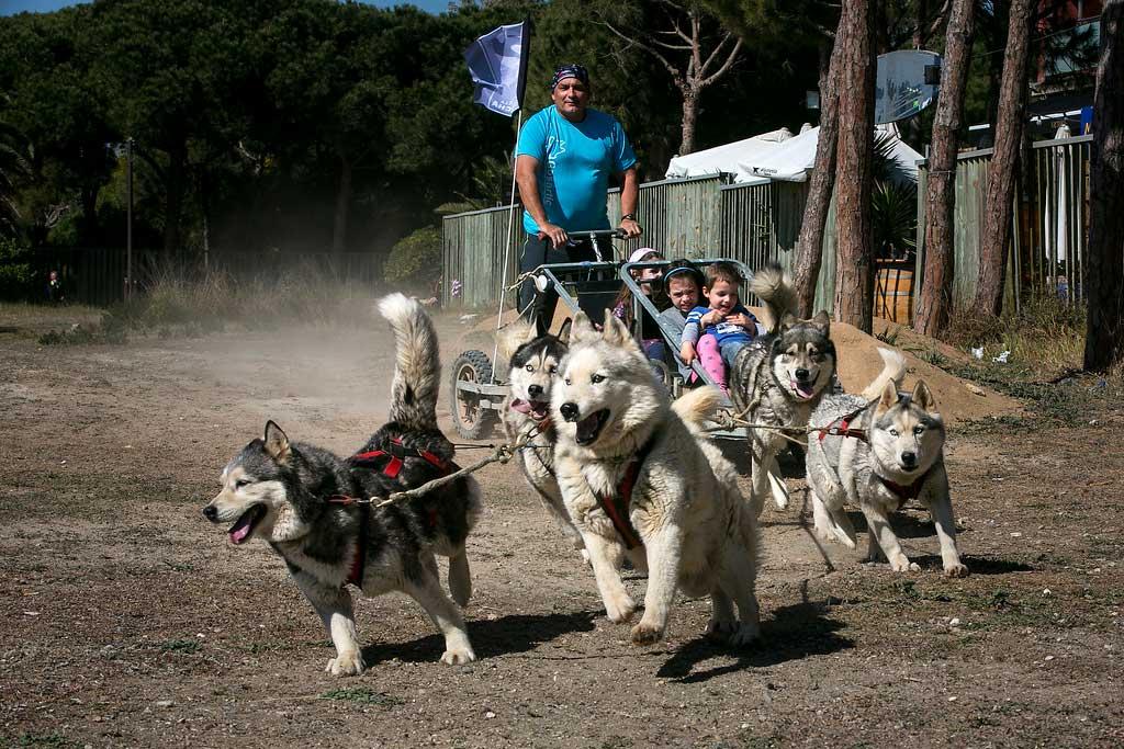 Éxito de la tercera edición del Dog Day by Gos Àrtic, la gran fiesta del deporte con perros y la tenencia responsable de animales.