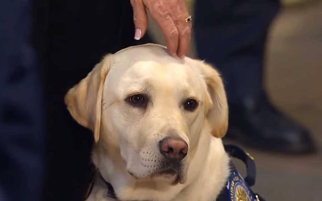Premio para Sully, el perro de George H.W. Bush.