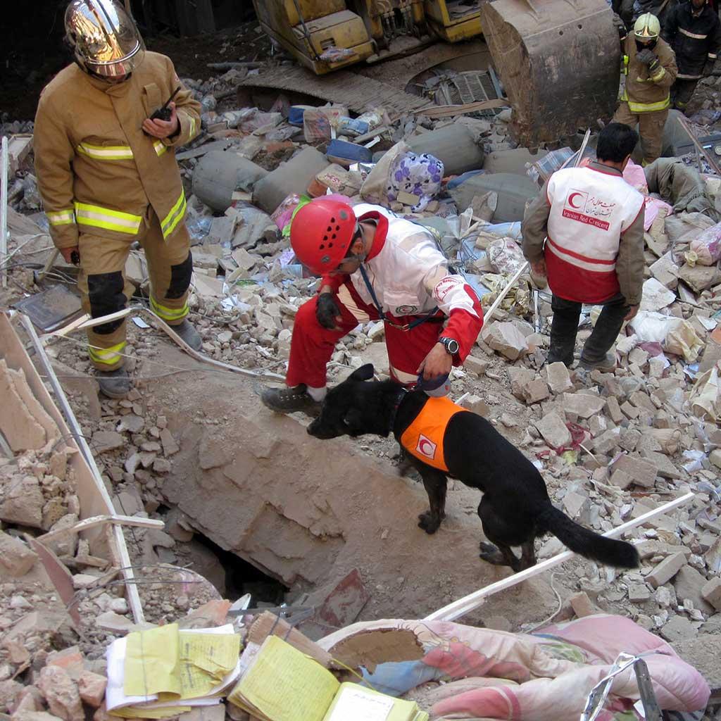 Seminario de jueces de rescate RSCE, reglamento FCI.