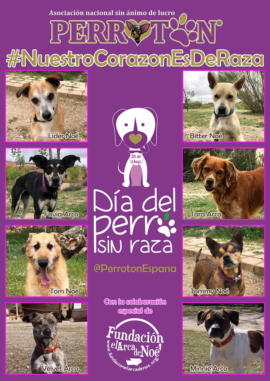 Por el Día del Perro sin Raza.