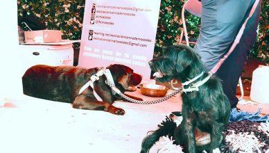 Kiwoko celebró el Día de la Adopción en sus tiendas con motivo del Día del Perro sin Raza.