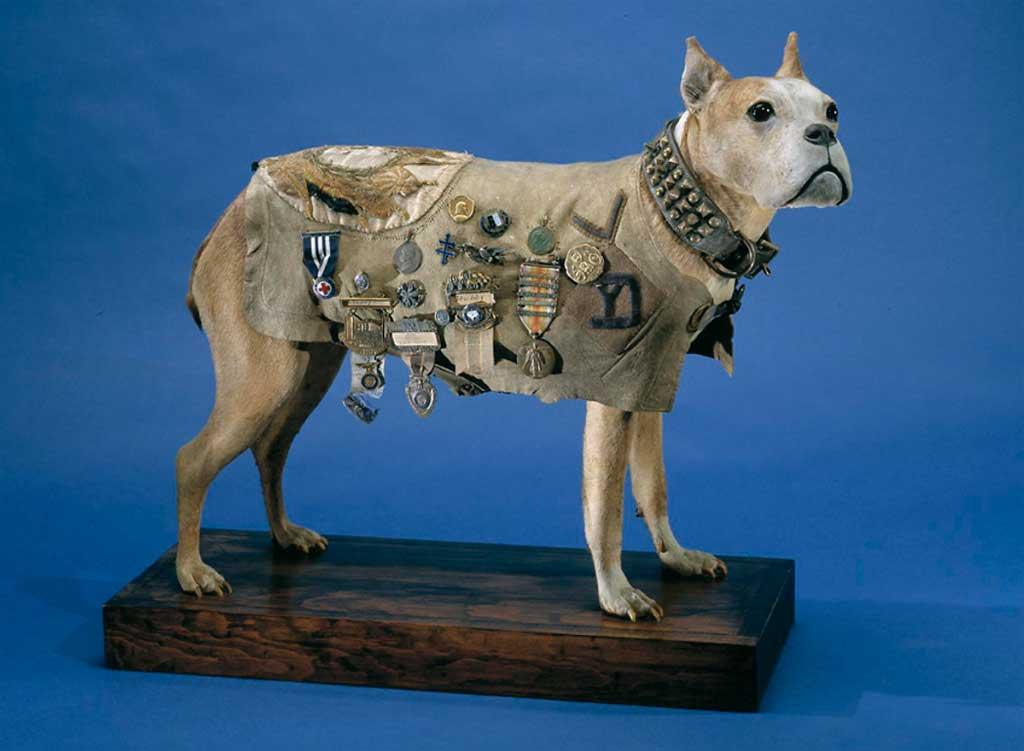 Stubby, el primer perro militar de Estados Unidos.