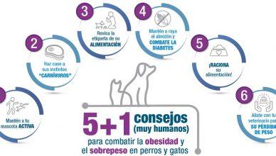 La obesidad y el sobrepeso de animales y humanos es una patología cada vez más presente en los países desarrollados.