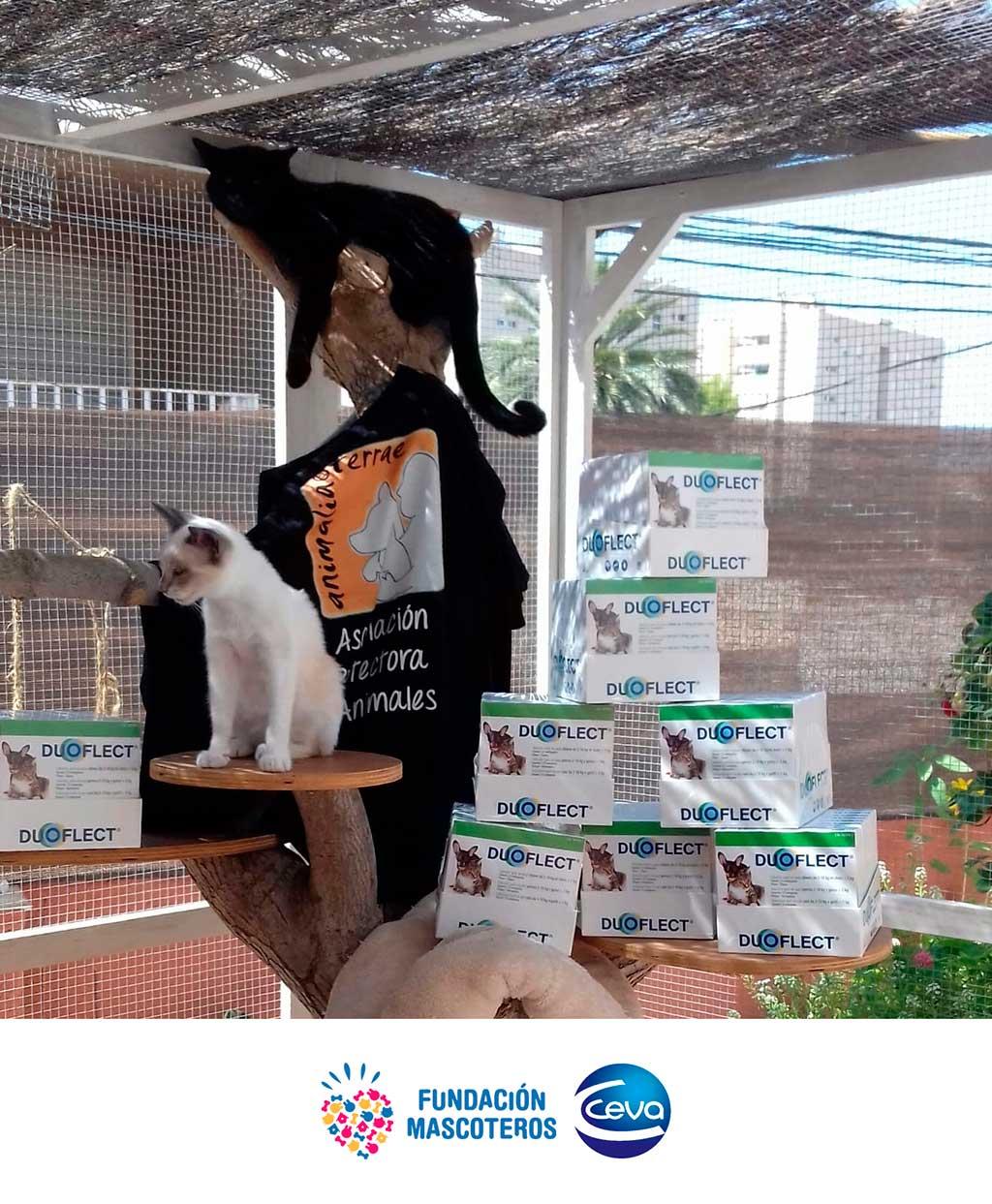 33.000 perros y gatos abandonados serán desparasitados gracias al donativo de un laboratorio.