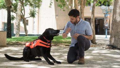 """Chaleco """"táctil"""" para comunicarse con los perros de rescate"""