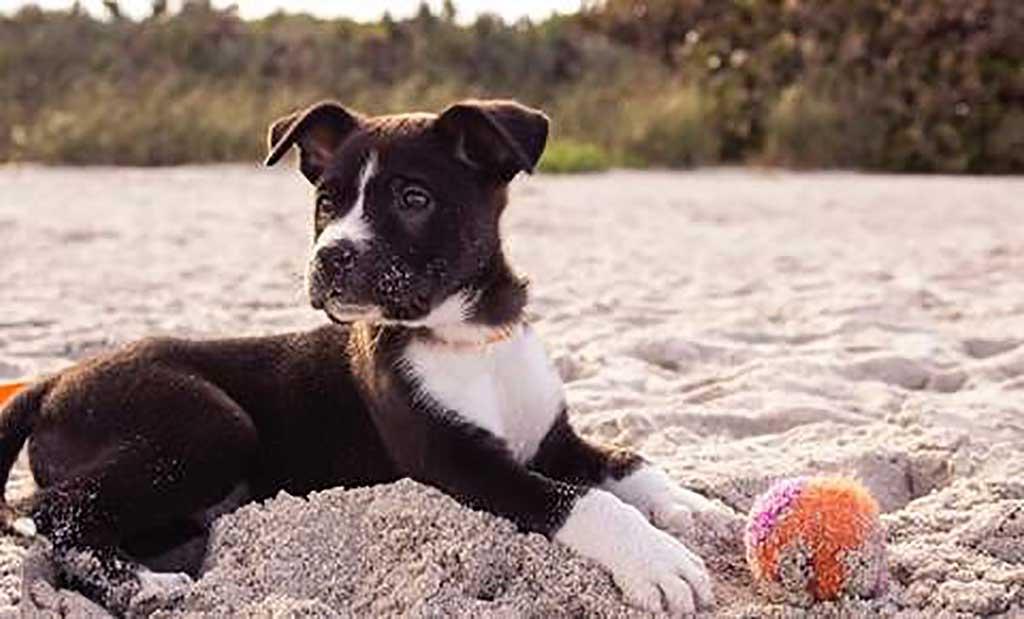 5 tips para disfrutar de un día de playa con tu perro.