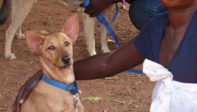 Conmfort Dog Project, en Uganda.