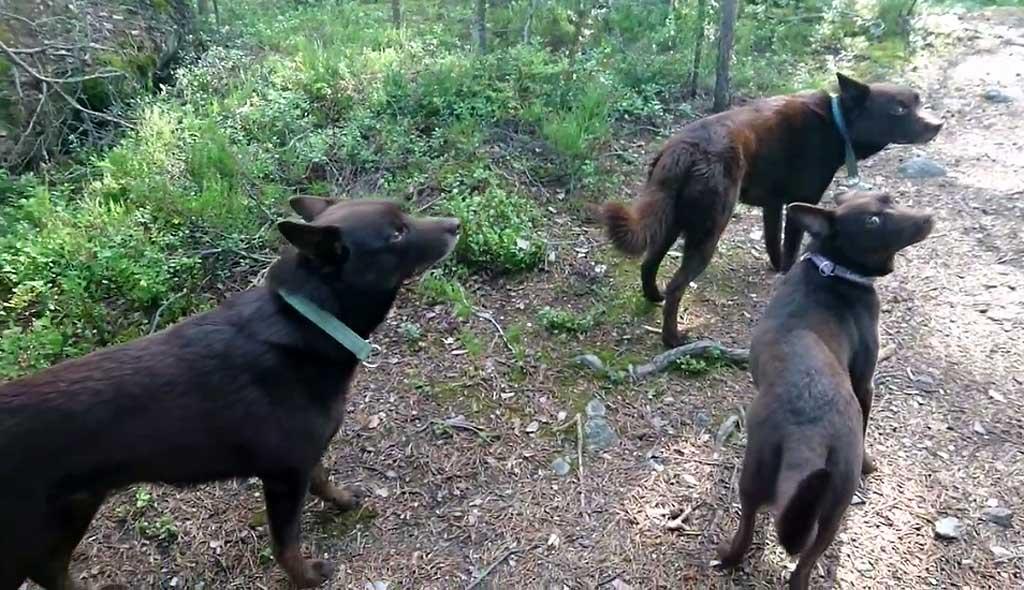 """El """"quieto"""" en los perros puede ser útil... o un espectáculo"""