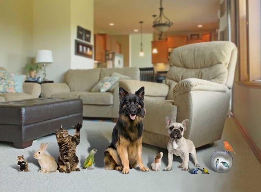 Cómo mantener el hogar limpio teniendo mascota .