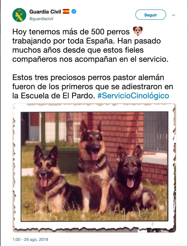Los primeros perros del Servicio Cinológico.