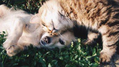 Perros y gatos, por una tenencia sostenible.