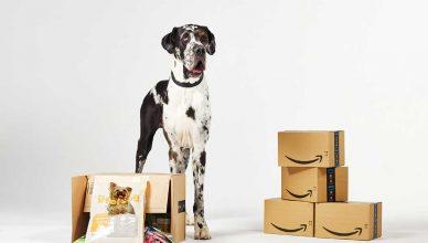 El 52% de los españoles prefiere a sus animales de compañía a los seres humanos, según un estudio realizado por Amazon.
