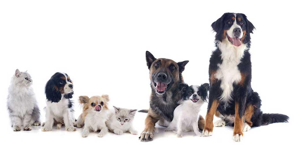 ¿Haces revisiones veterinarias periódicas a tus perros?