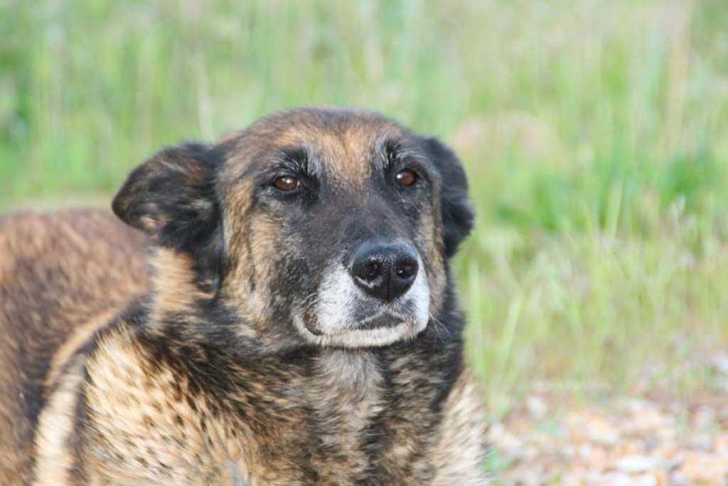 Nariz de Nieve alerta sobre la proliferación de cuidadores para perros sin licencia.