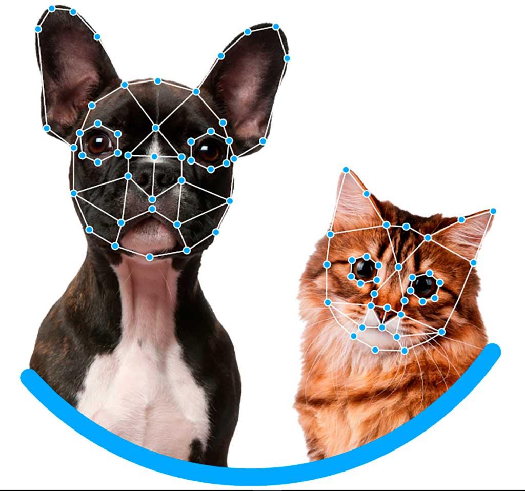 Mascofinder: Reconocimiento facial para recuperar a mascotas perdidas.