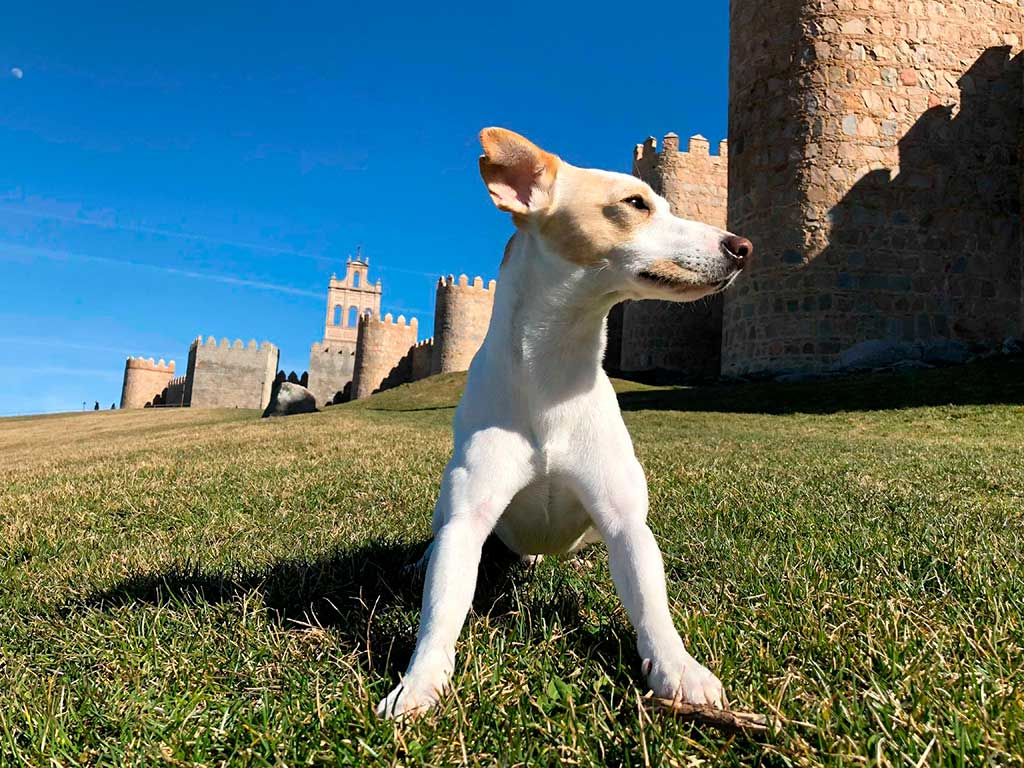 Pipper, el primer perro 'influencer' que ha dado la vuelta a España, salta al cómic