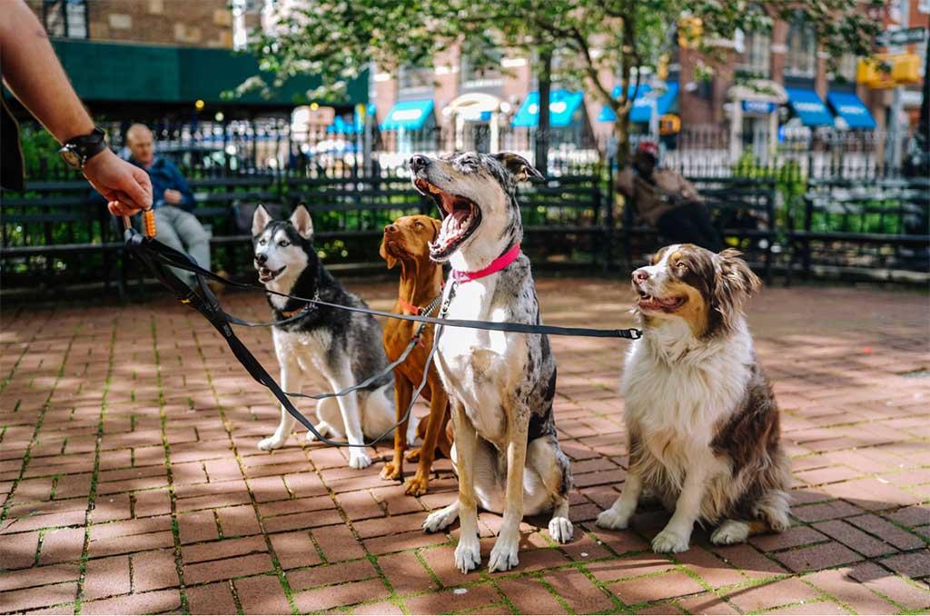 7 tips para cuidar a nuestra mascota con seguridad.