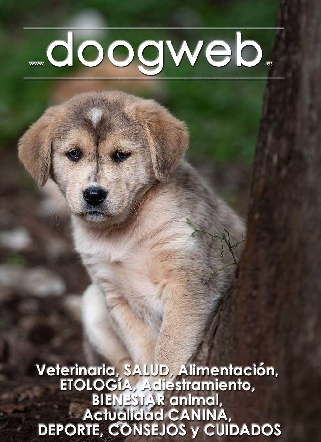 Revista gratis doogweb nº 87, diciembre 2019.