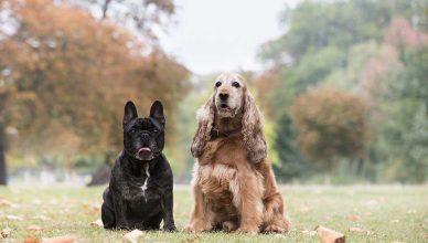 5 consejos para cuidar de tu perro en invierno.
