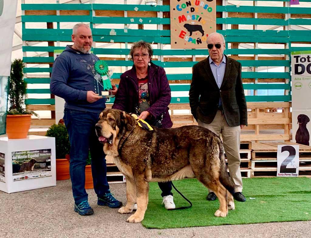 XXVI Feria del Perro, en Tineo