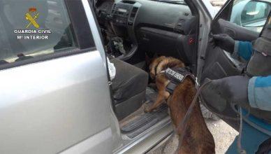Unidades caninas especializadas en detección de veneno.